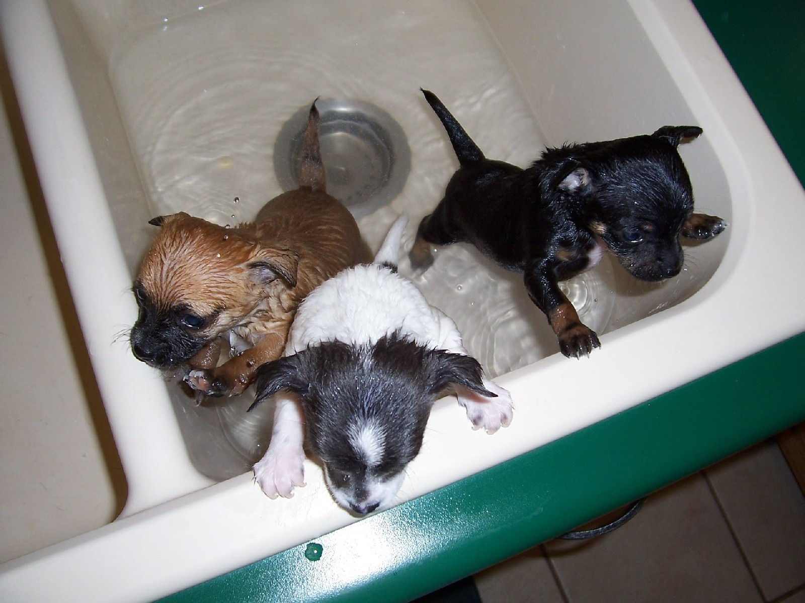 Kąpiel psa oraz kota - jak zapewnić bezpieczeństwo sobie i swojemu pupilowi?