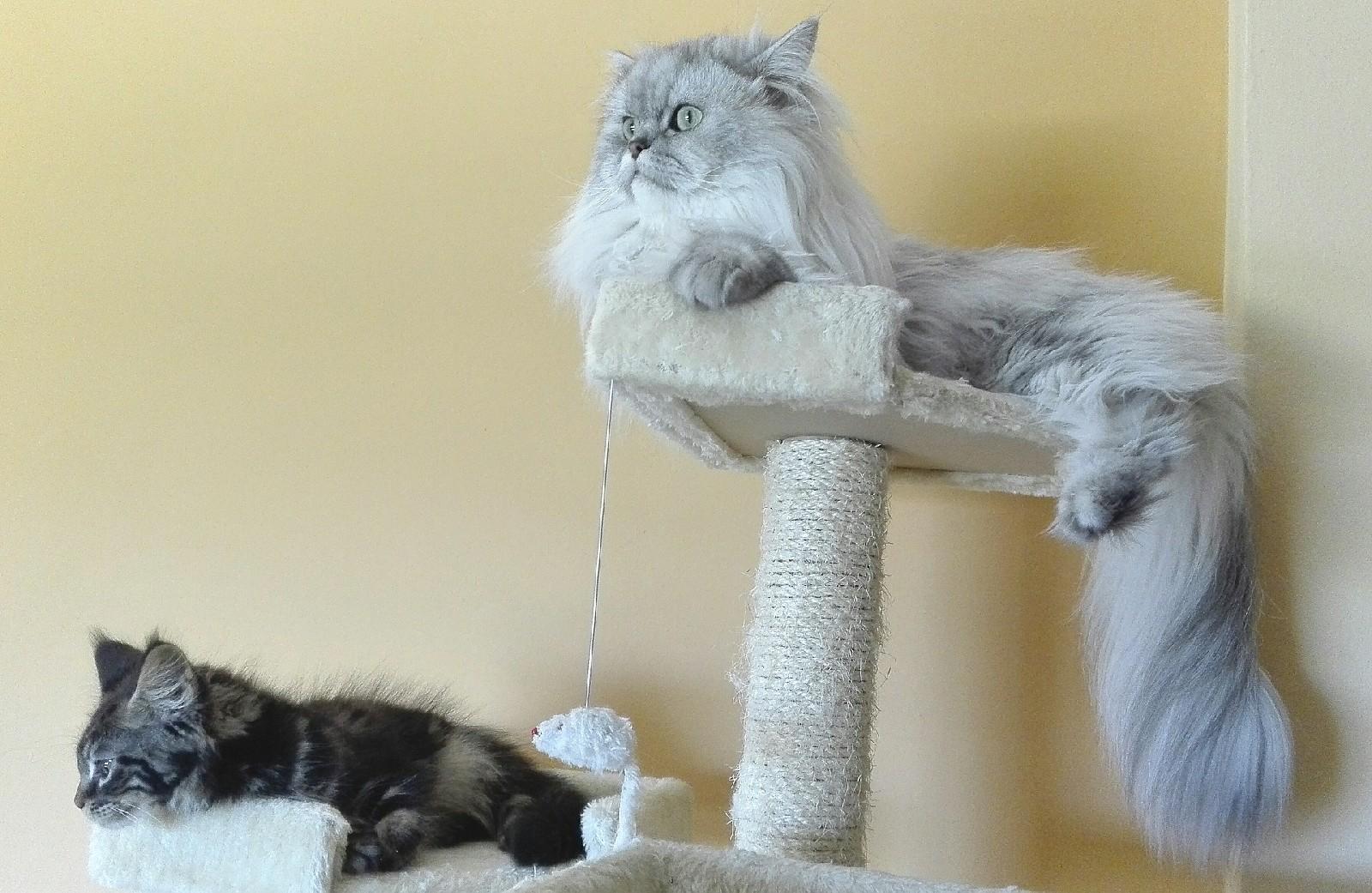 Wszędobylskie pazurki, czyli sposoby na drapak dla kota