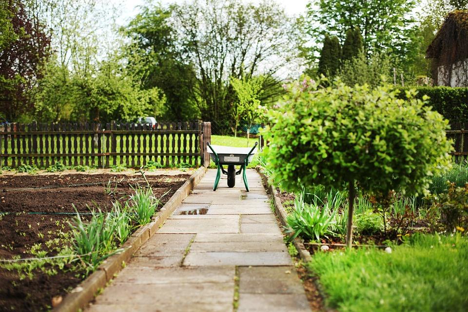 Zdjęcia ogrodu