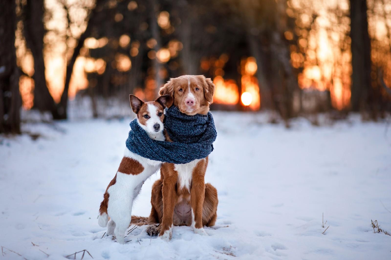 Modna odzież dla psa.