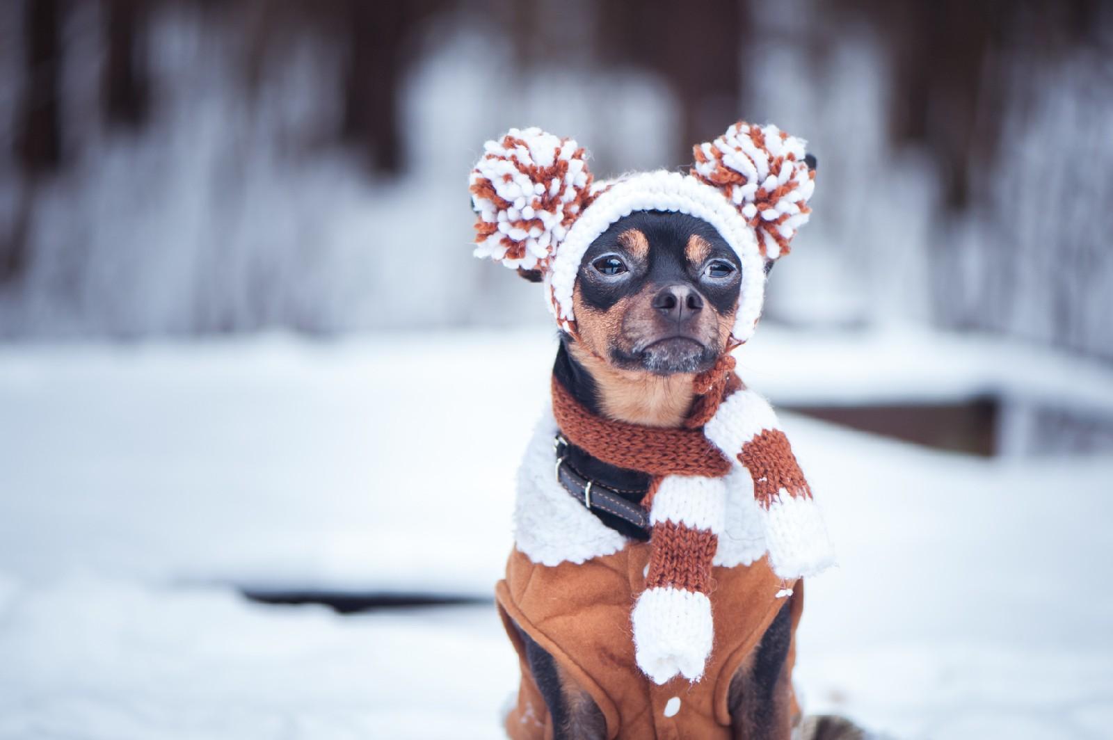 Ubrania dla psa - kapryśna moda czy konieczność?