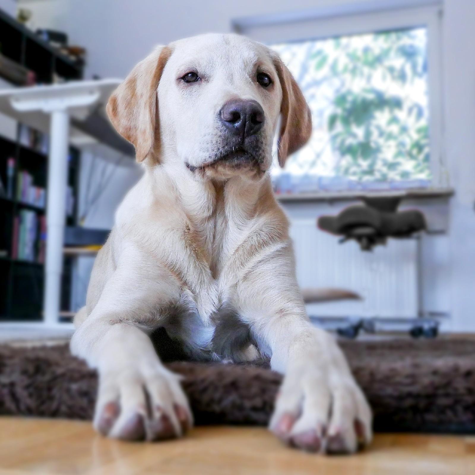 Pies w mieszkaniu - co warto wiedzieć?