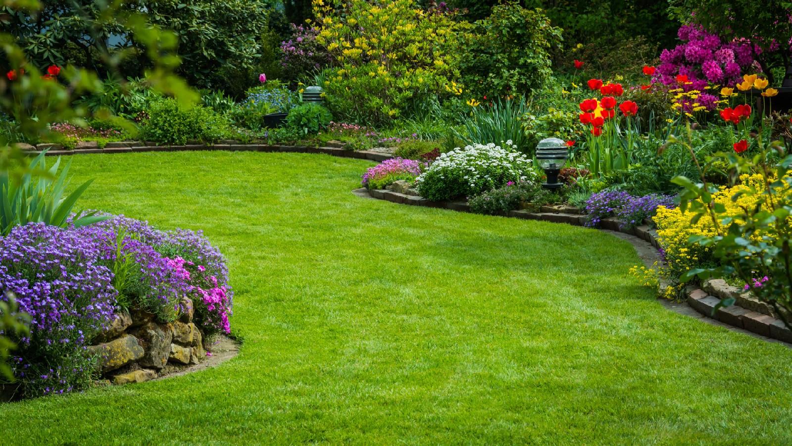 Trawnik ozdobą domu. Jak zadbać o jego piękny wygląd?